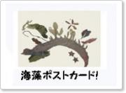 oyako_WS_SW_110823.jpg