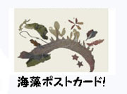 夏休み親子WS_海藻ポストカード